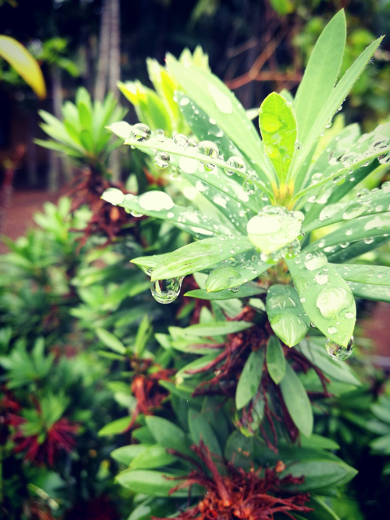 Nature Growth Plant Leaf Beauty In Nature Freshness Fragility Close-up Flower Outdoors Green Color Day No People Flower Head Animal Themes Passion Flower Water Drops Drops Of Water