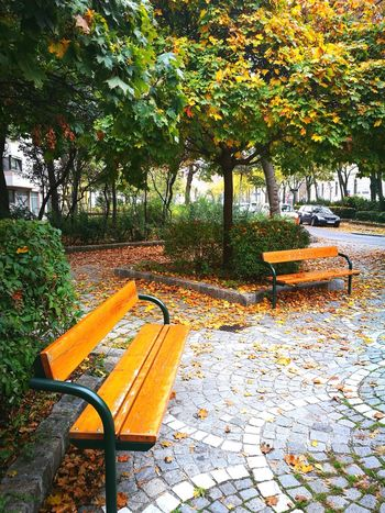 Chair Day No People Tree Outdoors Growth Nature Beauty In Nature Grass Green Color