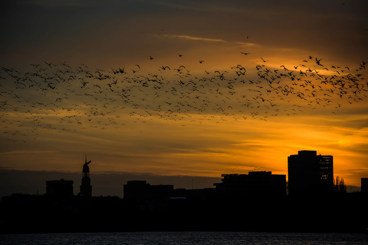 the roof is on fire Außenalster Birds Calm Embrace Urban Life Enjoying The View Eye4photography  EyeEm Best Shots Himmel Himmel Und Wolken Moody Moody Sky Nikon Nikonphotography Open Edit Silhouette Sky Sky And Clouds Sky_collection Skyporn Sonnenuntergang Sunlight Sunset Sunset Silhouettes Urbanphotography Warm Colors