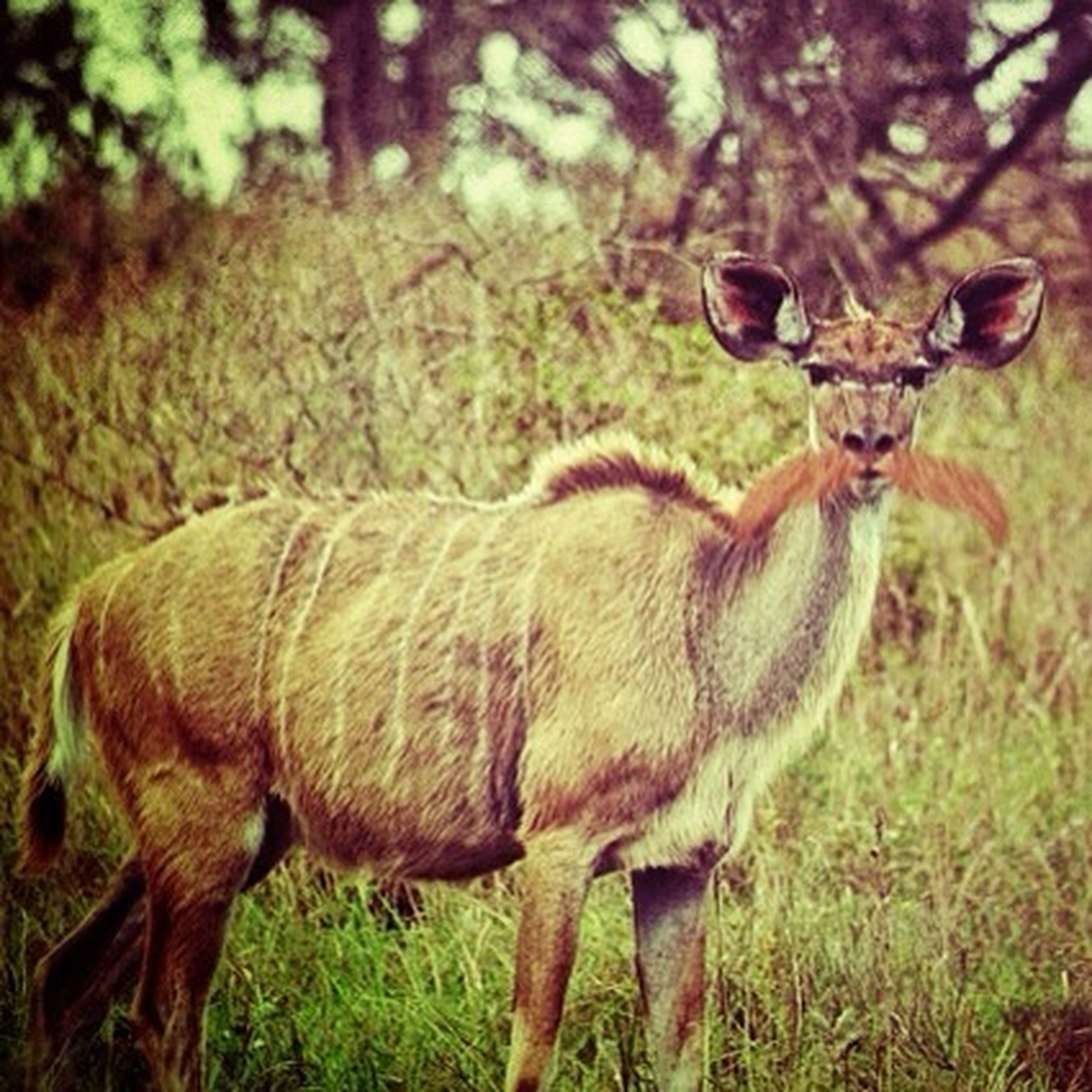 animal themes, animals in the wild, mammal, wildlife, one animal, field, deer, tree, forest, focus on foreground, nature, grass, standing, full length, day, grassy, outdoors, no people, tree trunk, brown
