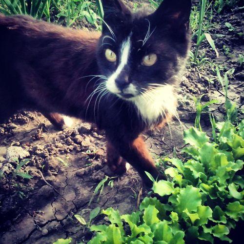 кошка кошечка Cat кошке_13_лет моя_пожелая_кошечка )