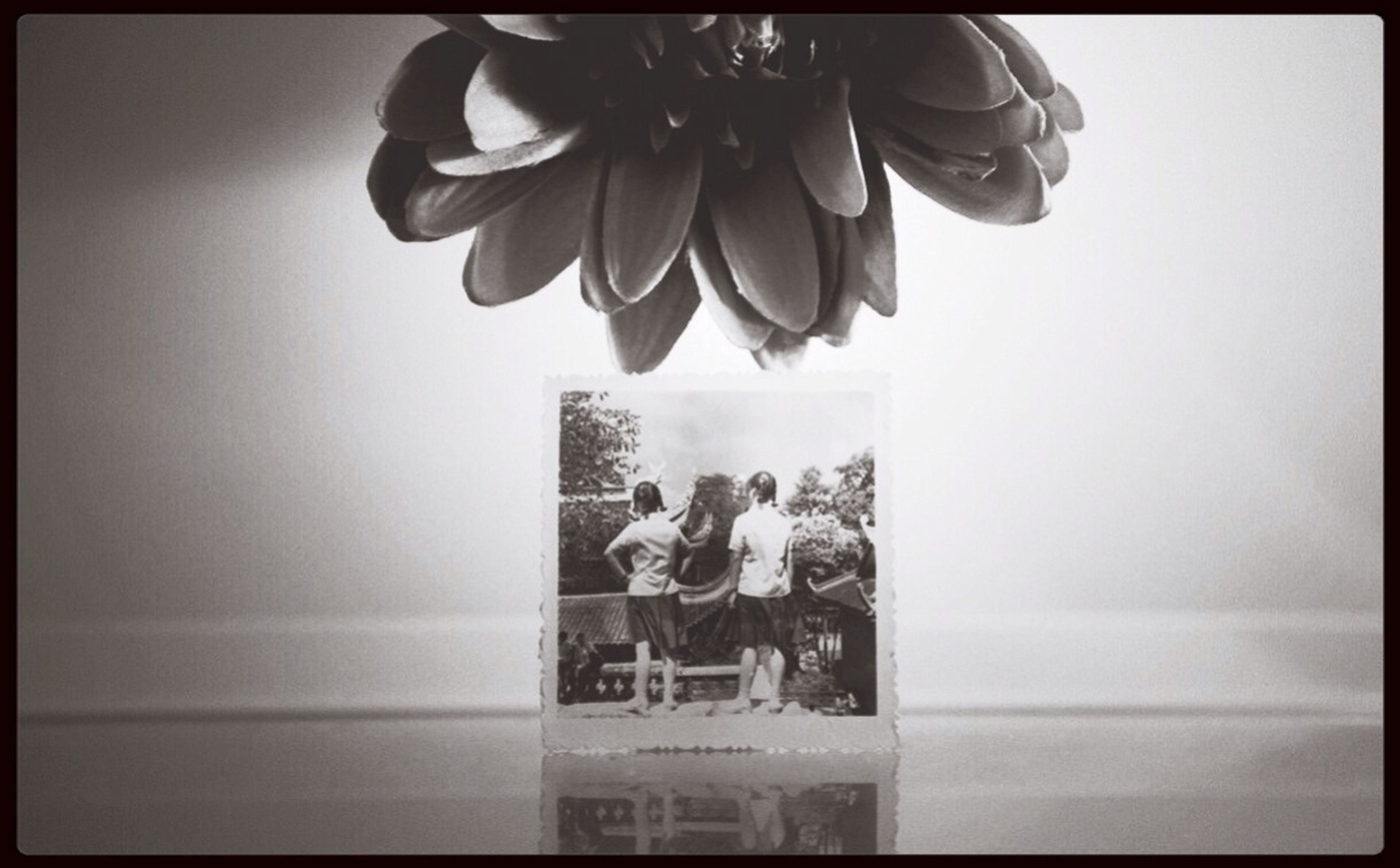 transfer print, indoors, auto post production filter, flower, lifestyles, person, freshness, leisure activity, standing, men, copy space, table, day, potted plant, love, casual clothing, water