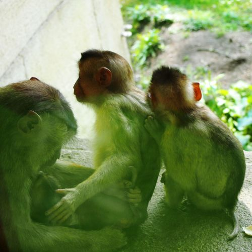 EyeEmNewHere Family Together Monkey Familiar Like Human Stay Together SUPPORT Love Grow Up Hidden Beauty Tranquil Scene Rural Scene Growth Naturelovers Colours Best EyeEm Shot EyeEm Best Shots Fascination