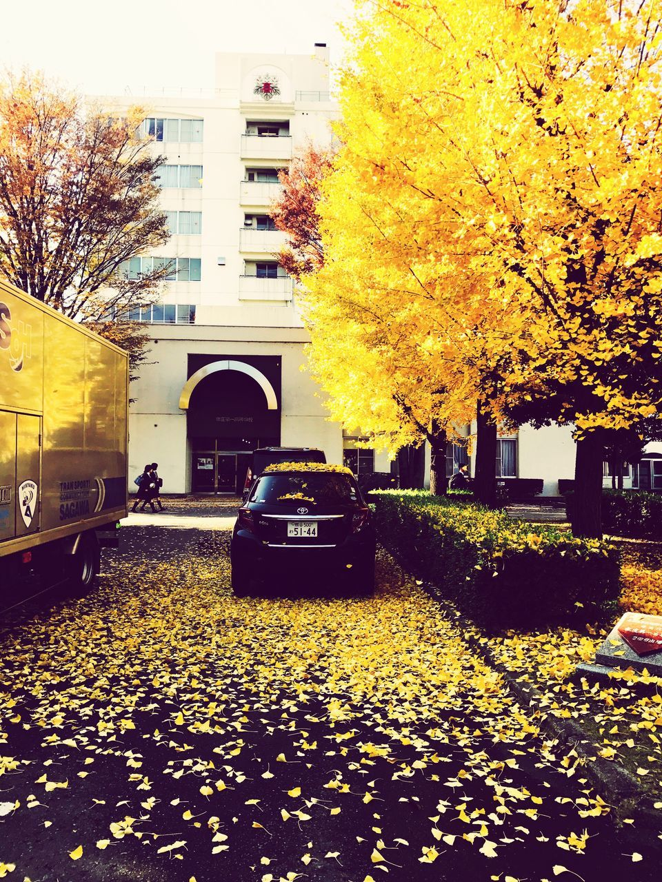 tree, architecture, building exterior, built structure, autumn, yellow, outdoors, change, no people, city, nature, flower, day, sky