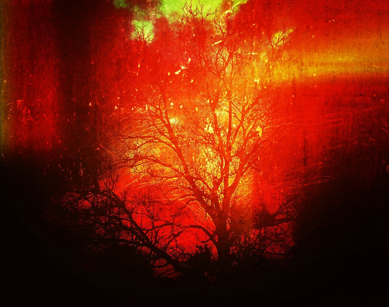 tree, night, nature, no people, outdoors, burning, tranquility, beauty in nature, tranquil scene, forest, heat - temperature, growth, scenics, branch, sky