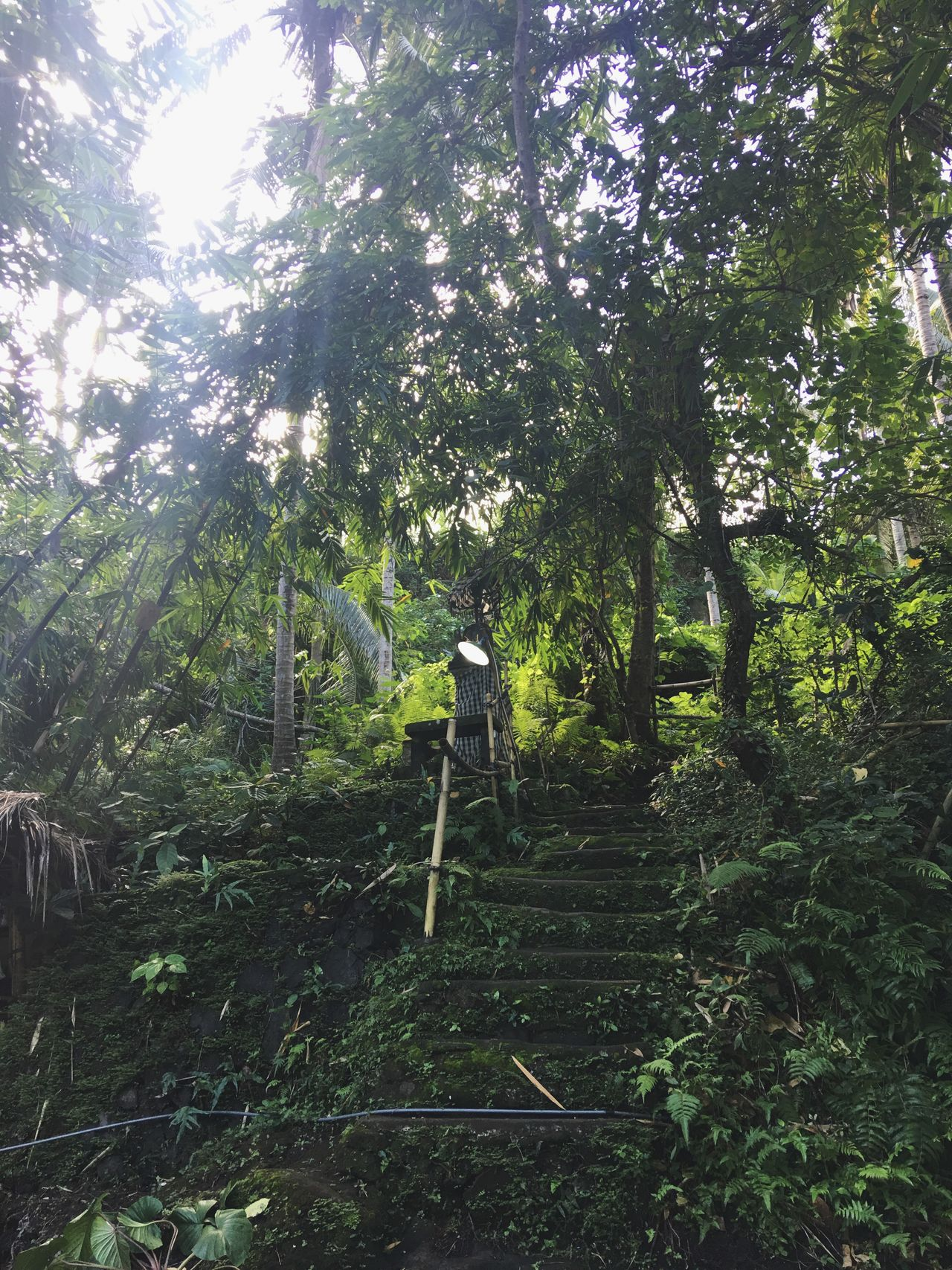 Bali Ubud Nature Forest Hike Hiking Path Pathway Exploring Leisure Activity Outdoors Lifestyles Sunlight Direction Photooftheday Stairs Tree Trees