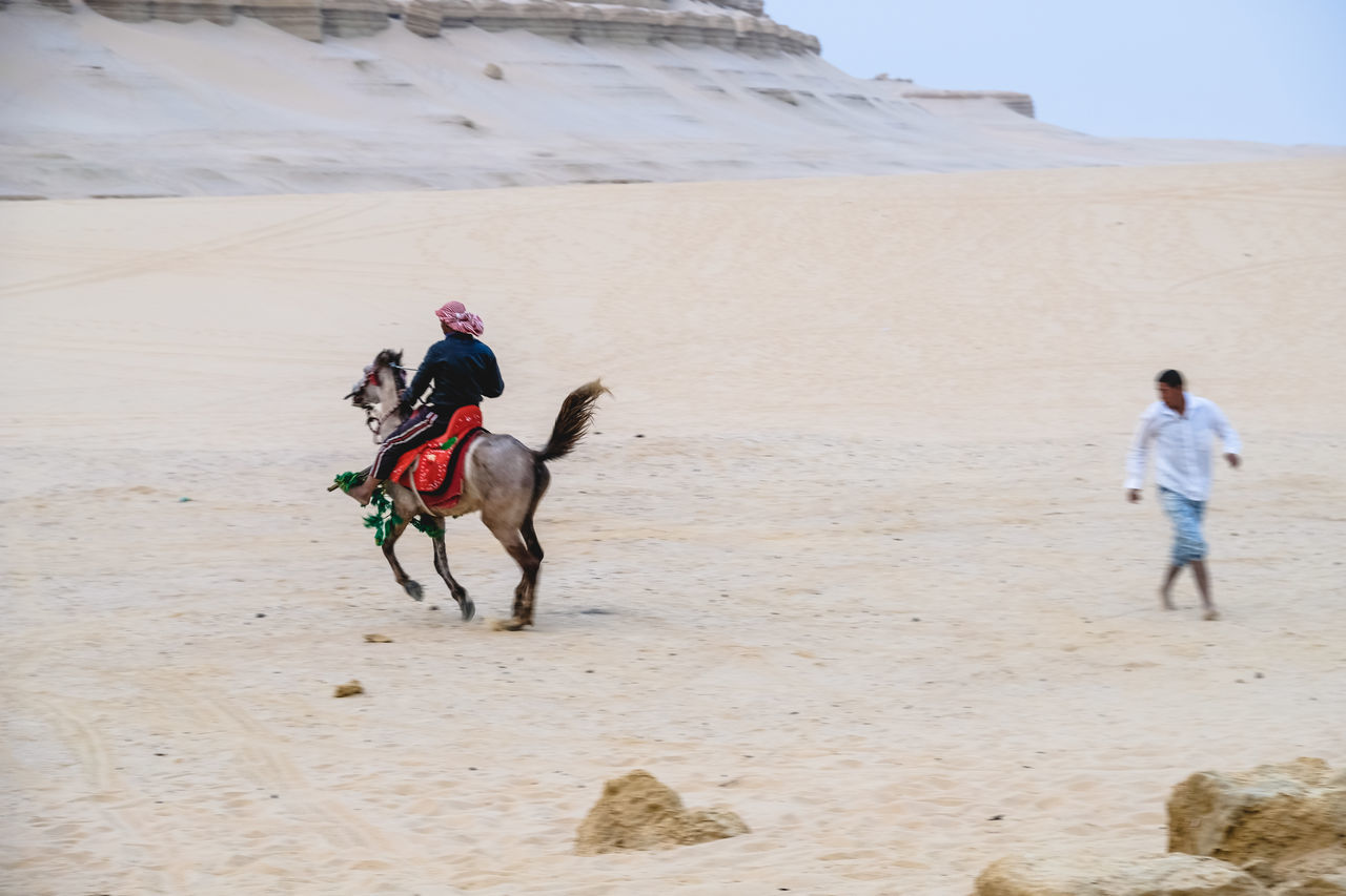 Adult Arabian Horse Beach Day Desert Dog Domestic Animals Full Length Leisure Activity Lifestyles Mammal Men Nature One Animal One Man Only One Person Only Men Outdoors Pets Real People Riding Running Sand Sky WADI El-Rayan, Fayoum, Egypt Live For The Story BYOPaper! The Street Photographer - 2017 EyeEm Awards The Great Outdoors - 2017 EyeEm Awards