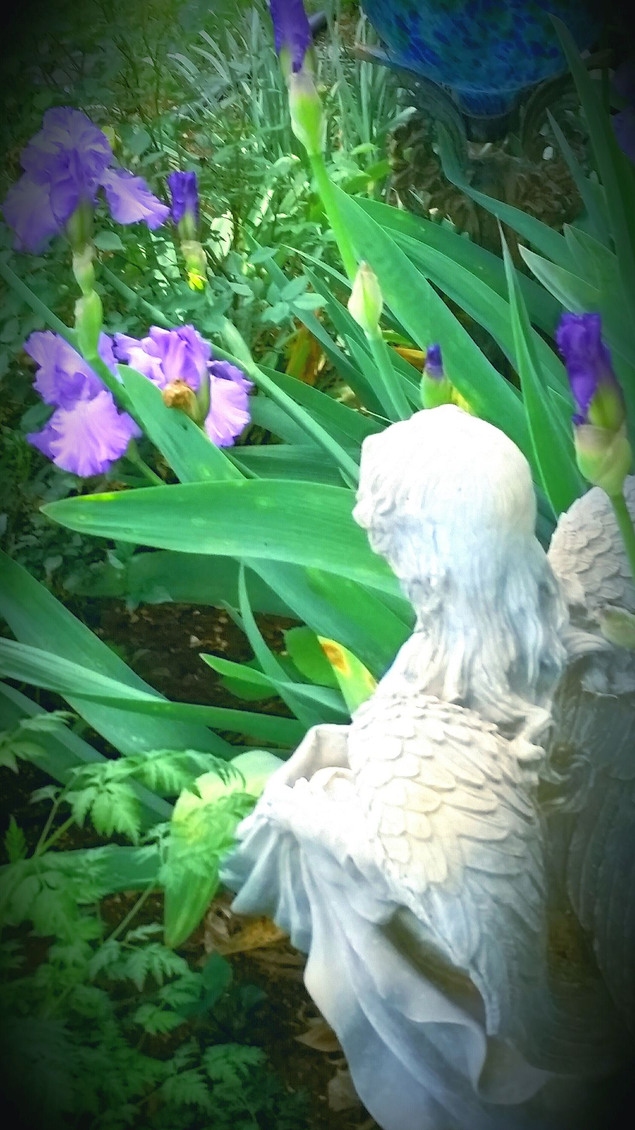 Garden Photography Flowers Angels Garden Outdoors Keeping Watch Spring Flowers