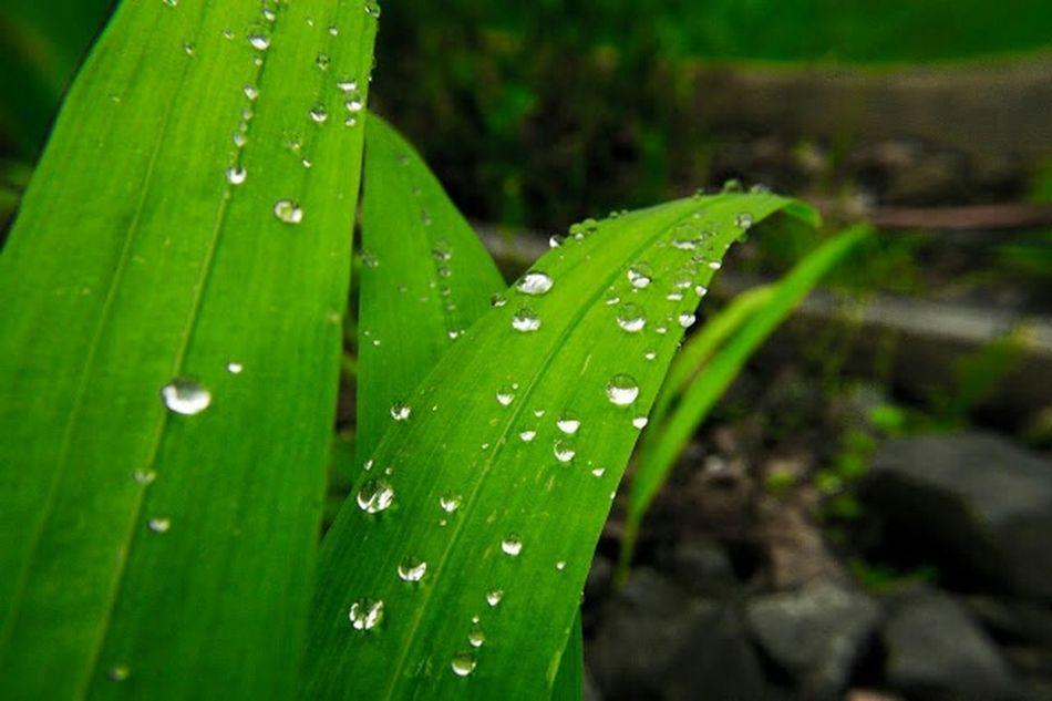 Macro Macro Photography Morning Dew Dew Drops Garden Canonphotography DSLR Photography Jewell Photography North Bend Oregon Oregon Coast Outdoor Photography Bayarea Coos Bay