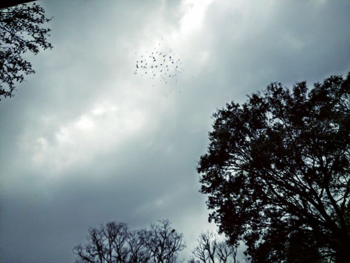 Migrating Birds Birds Of A Feather Flock Together Flock Off Opportunity Sky Cloudy Day Just Passing Through First Eyeem Photo Nature Birds In Flght Traveling Home For The Holidays Flying High Welcome To Black Long Goodbye