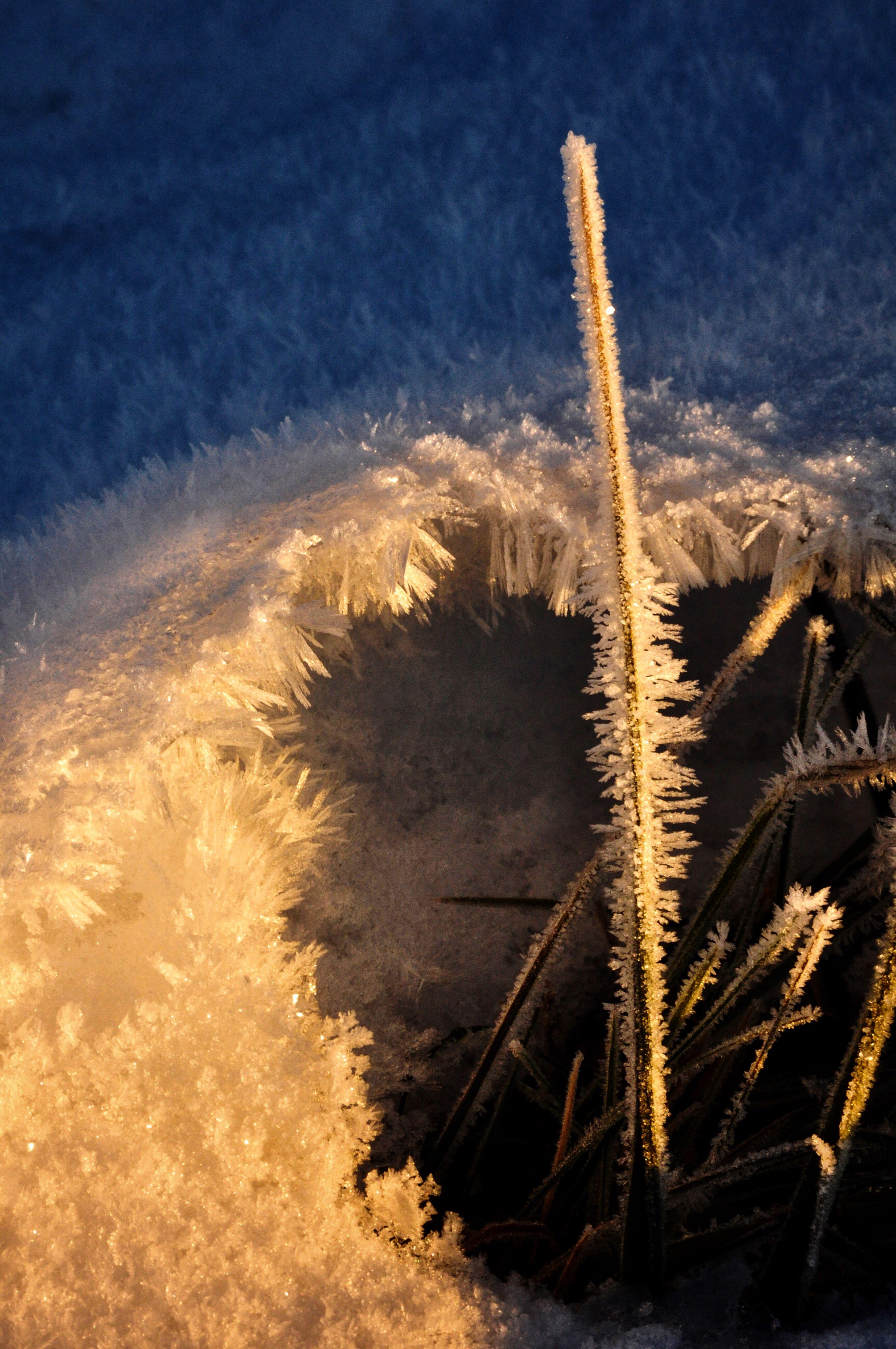 Frosty ... Macro_collection Frozen Frost Snow Winter Wonders Frigid Beauty