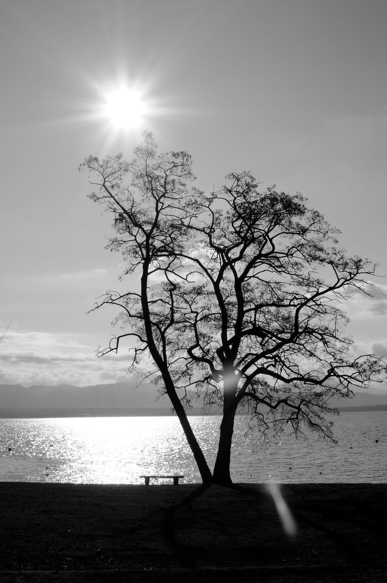 Blackandwhite Light And Shadow Lake Tree Nature Lac Léman Switzerland Silhouette Bnw_friday_eyeemchallenge