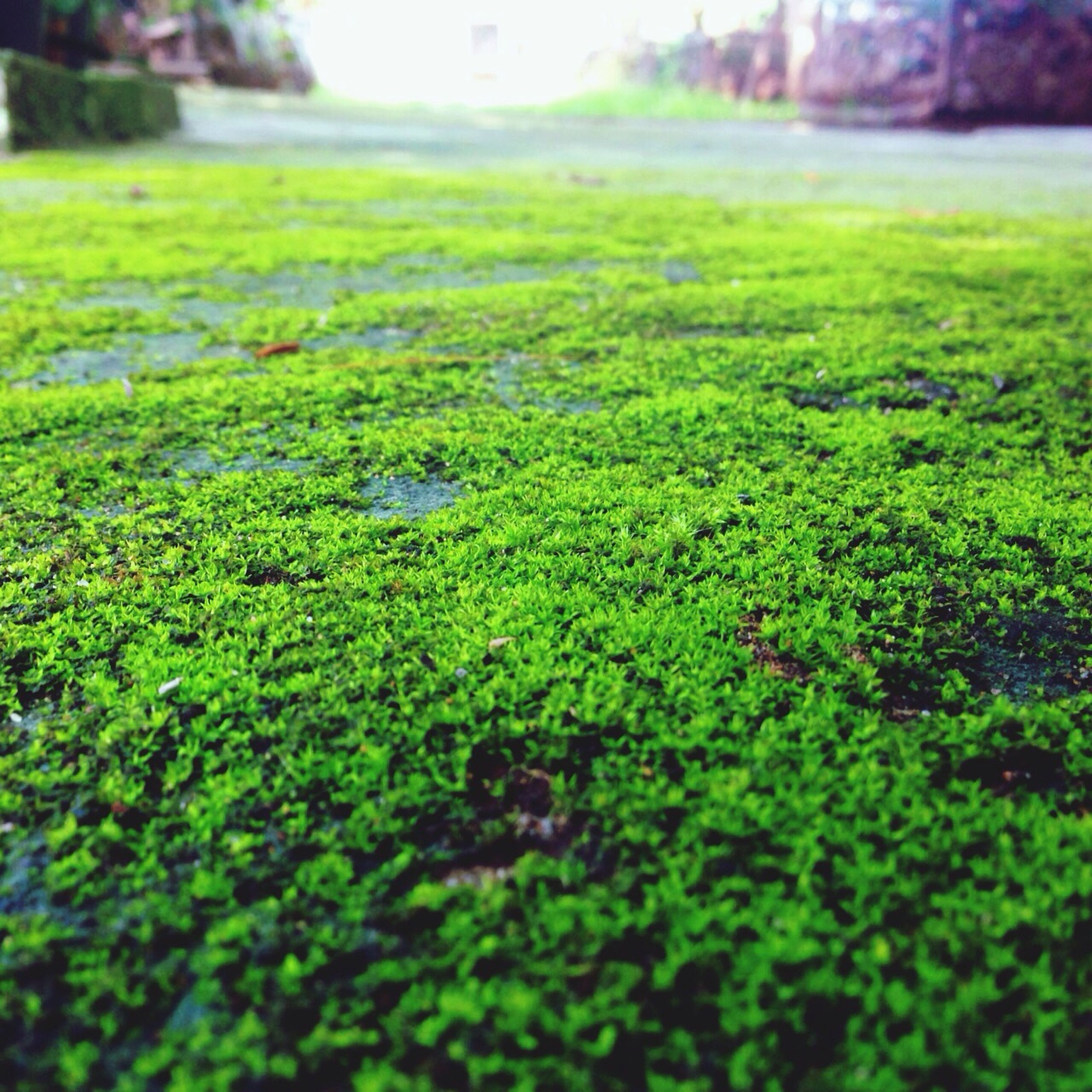 green color, grass, growth, selective focus, plant, nature, surface level, focus on foreground, field, beauty in nature, green, tranquility, day, outdoors, moss, close-up, lush foliage, no people, leaf, growing