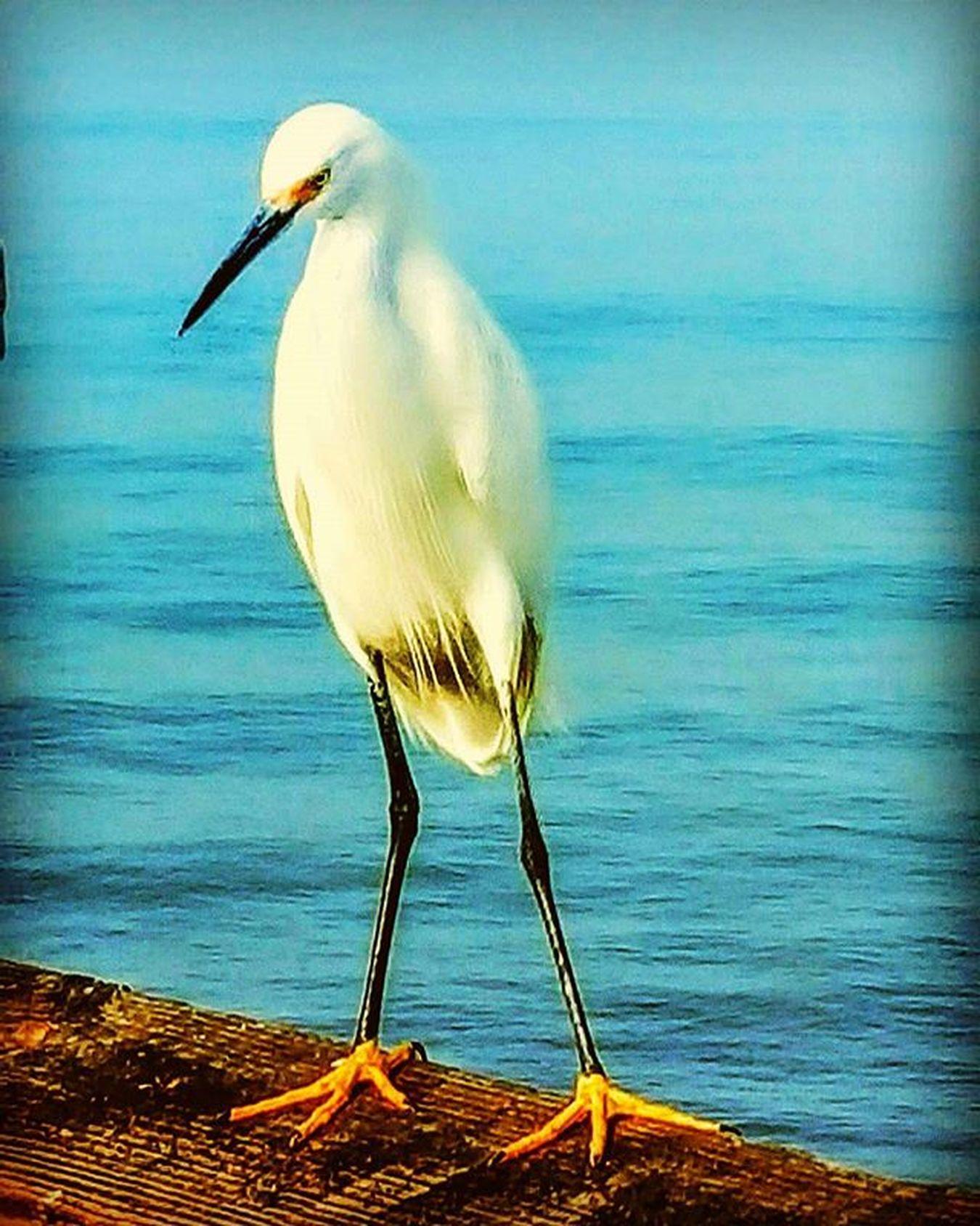 Venicebeach , Venicepier , Birdy , Beachbird , Strangebird