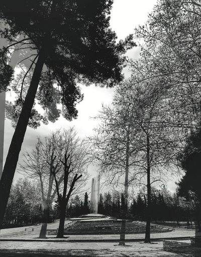 Double exposure monument Double Exposure Blackandwhite Monument Monochrome Tree Silhouette Outdoors Low Angle View Day No People Nature