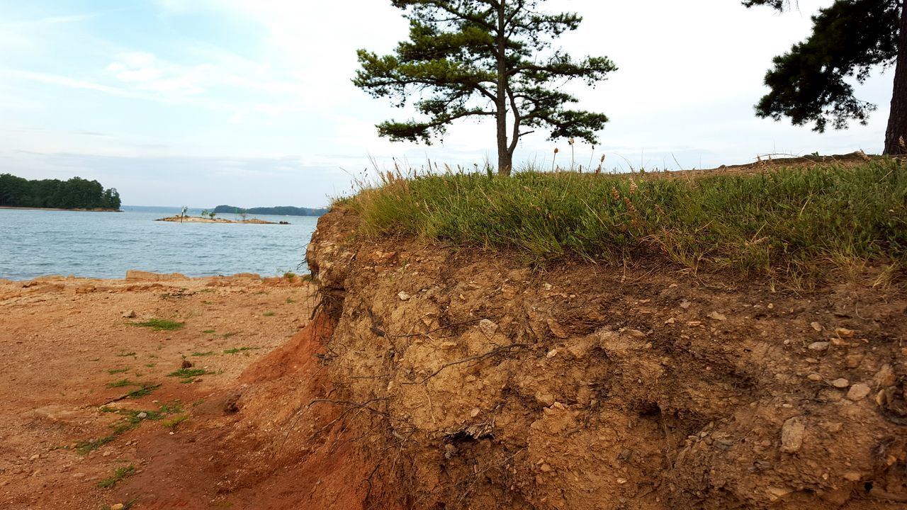 sky, tree, nature, sand, beach, sea, outdoors, water, tranquility, day, beauty in nature, tranquil scene, scenics, growth, no people, grass