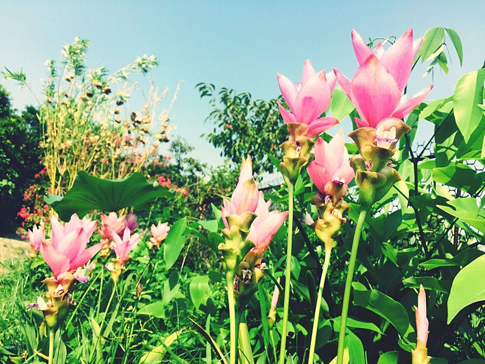 Check This Out Hello World Relaxing Taking Photos Enjoying Life Summer Holiday ☀☀☀ Taoyuan Flowers