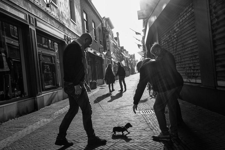 Puppy needs attention Animal Attention Care City Contrast Dog Haarlem Holland Light Men Netherlands Outdoors People Shadow Sun Sunray Walking