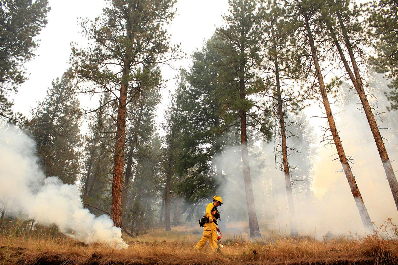 Beautiful stock photos of feuer, tree, forest fire, one person, smoke - physical structure