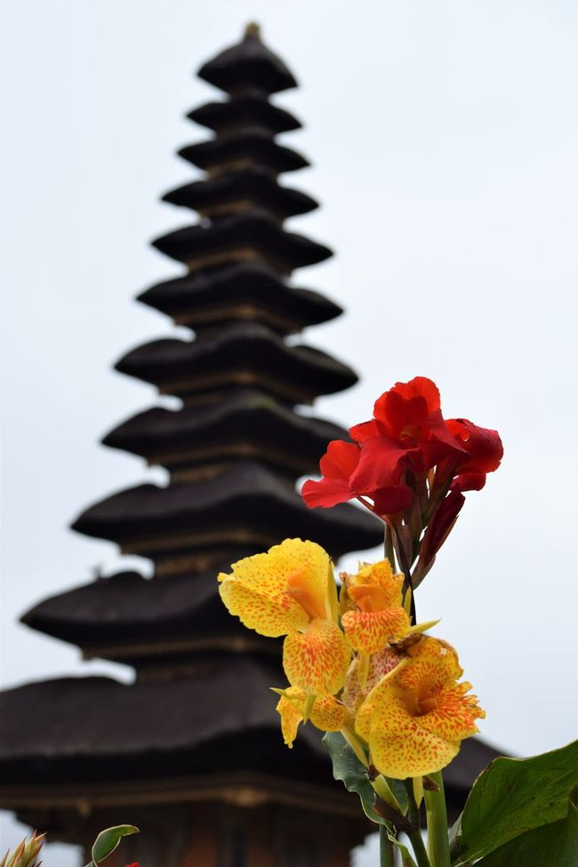 Architecture Bali Balinese Balinese Culture Flower Peaceful Plant Red Sacred Sacred Places Temple