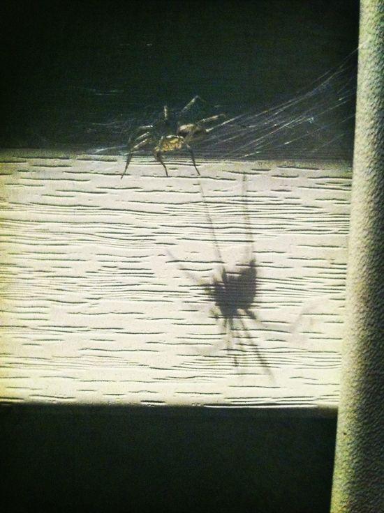 Spider Gahh