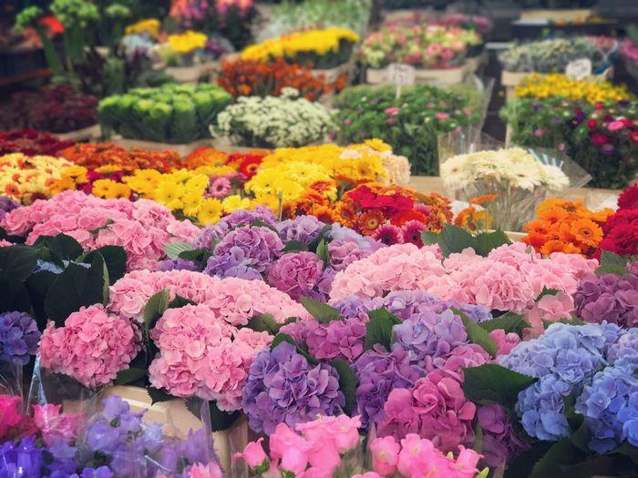 Flower Fragility Flower Market Multi Colored Retail  Flower Shop For Sale Freshness Variation No People Bouquet Petal Choice Flower Head Abundance Nature Day Beauty In Nature Market Rose - Flower 愛アムステルダム 花に囲まれる幸せ 阿姆斯特丹 I'm Happy