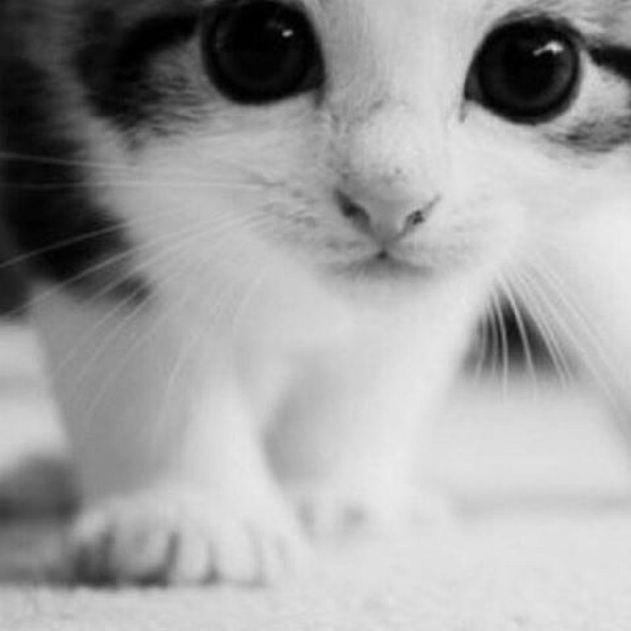 Cats_of_instagram Cats Animallover Kitty Kitten Save_animals Savethenature YouAreNotAlone Wearenotalone Instagram_turkey Instadaily Insta_people Instamood Instalike Instagram Kedi Kediler Hayatasaygı Yasam Hayvanlarıkoruyalım Love Look Lovely Cute