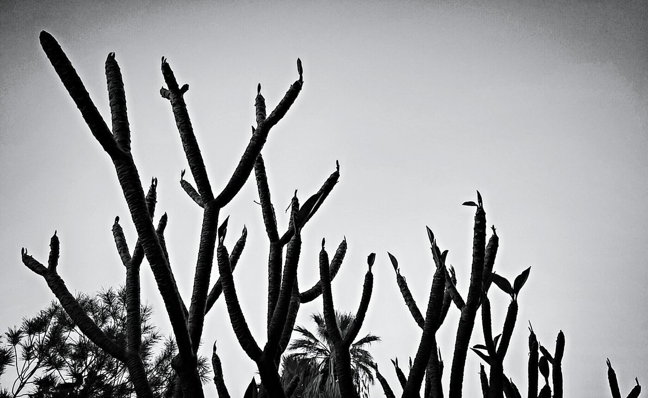 Close-Up Of Bare Stems Against Clear Sky