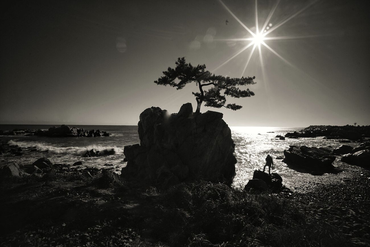 Man Alone Sea And Sun Shapes , Lines , Forms & Composition Rock And Sea Pine Tree Blackandwhite