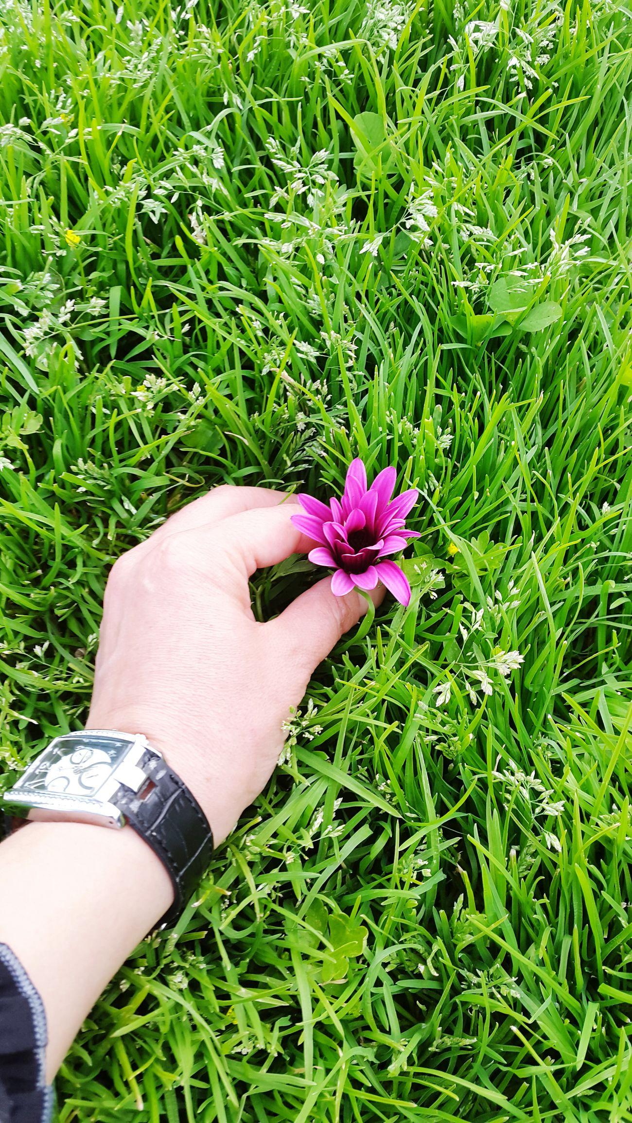 Antalya Iloveturkey EyeEm Best Shots - Flowers ı Love Nature! Holiday♡ AlwaysSmile