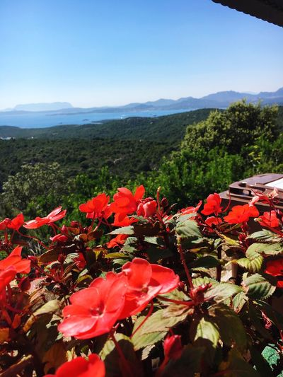 Flowers Nature Viewpoint Panorama Sardinia Sardegna Italy