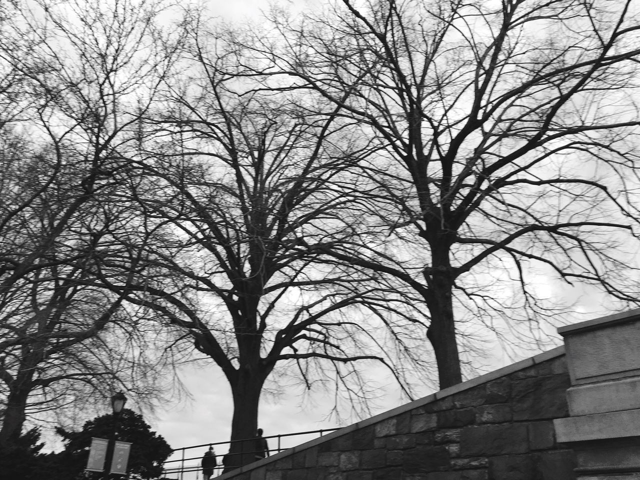 Winter trees/ blues Bare Tree No People Architecture Tree City Sky Branch Outdoors Nature IPhoneography Blackandwhite EyeEm Best Shots New York Open Edit Background New York City Central Park Backgrounds Pattern Pieces Pattern, Texture, Shape And Form Beauty In Nature Nature