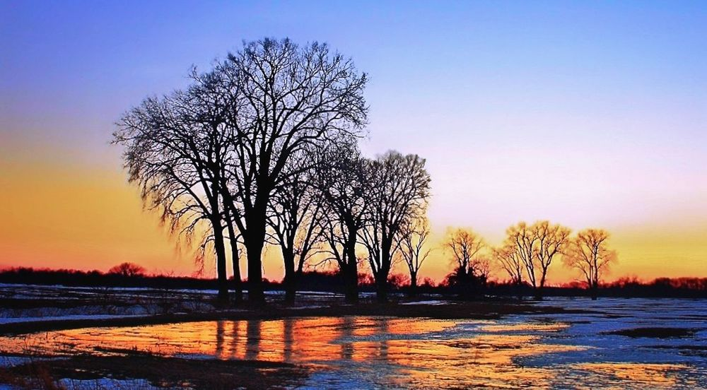 Blue hour in Wisconsin Tree Sunset Nature Water Reflection Silhouette Outdoors Beauty In Nature Landscape No People Sky Scenics Day Bluehour Landscape_photography Wisconsin WisconsinSunset Silhouette Tree Beauty In Nature Nature Tranquility Tranquil Scene Landscape Photography USA
