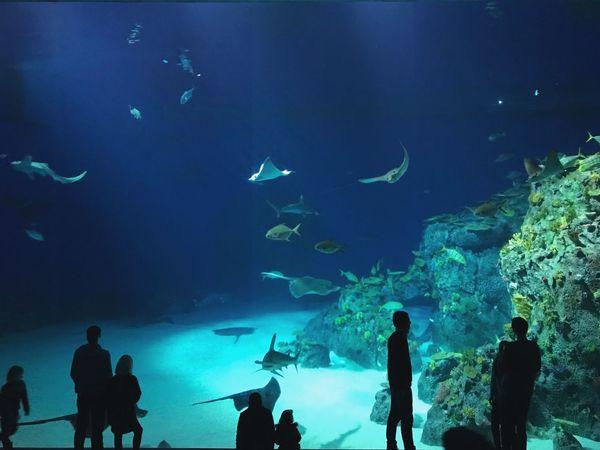 Fish Real People Aquarium Large Group Of Animals Silhouette Sea Life Animals In Captivity