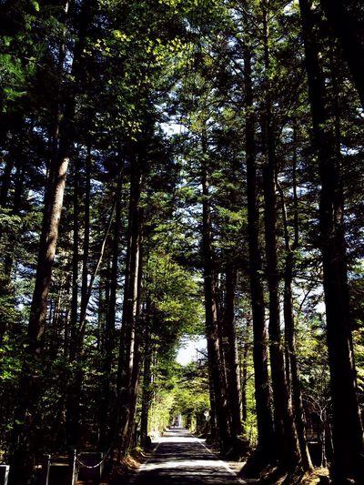 Walking in the morning, Karuizawa . Trees Forest