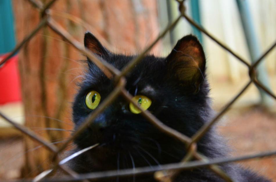Alertness Animal Themes Barbed Wire Behindthefence Black Cat Black Color Cat Close-up Domestic Animals Domestic Cat Feline Fence Focus On Foreground Pets Portrait Staring Whisker