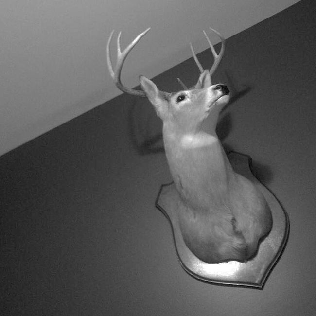 Deerhead in my cousin's room. His name's Jerry ??