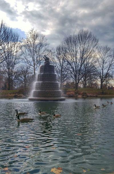 Columbus, Ohio Columbus Ohio Short North Goodale Park Geese Goose Fountain Water Fountain Elephant Overcast Trees Colour Of Life