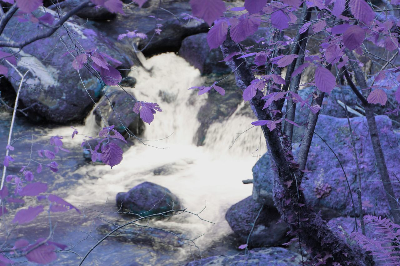 Waterfall Water Leaves Fantasy Beautiful Nature Water_collection Lille Imaginary Landscapes Different Purple Imagine Your World Fantasy Photography Alice In Wonderland Another World Magical Places Dreams Atmosphere Landscape Light And Shadow Surreal Colors Of Nature Violet Colors Nature Imagination