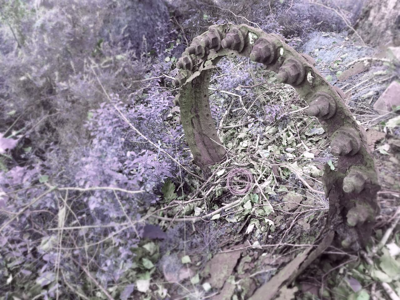 growth, nature, purple, no people, day, plant, outdoors, fragility, beauty in nature, close-up, flower, freshness