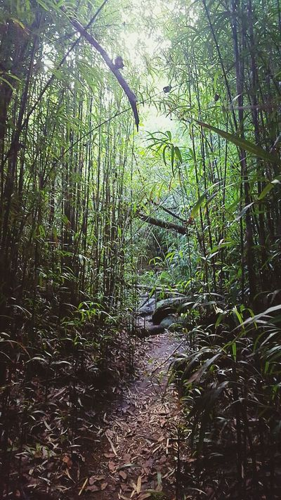 Enjoying Life Backpacking Island Life Love Hawaii Adventure Travel Hiking Hikingadventures Relaxing HikeLife Getaway  Camping Bamboo Bamboo Forest