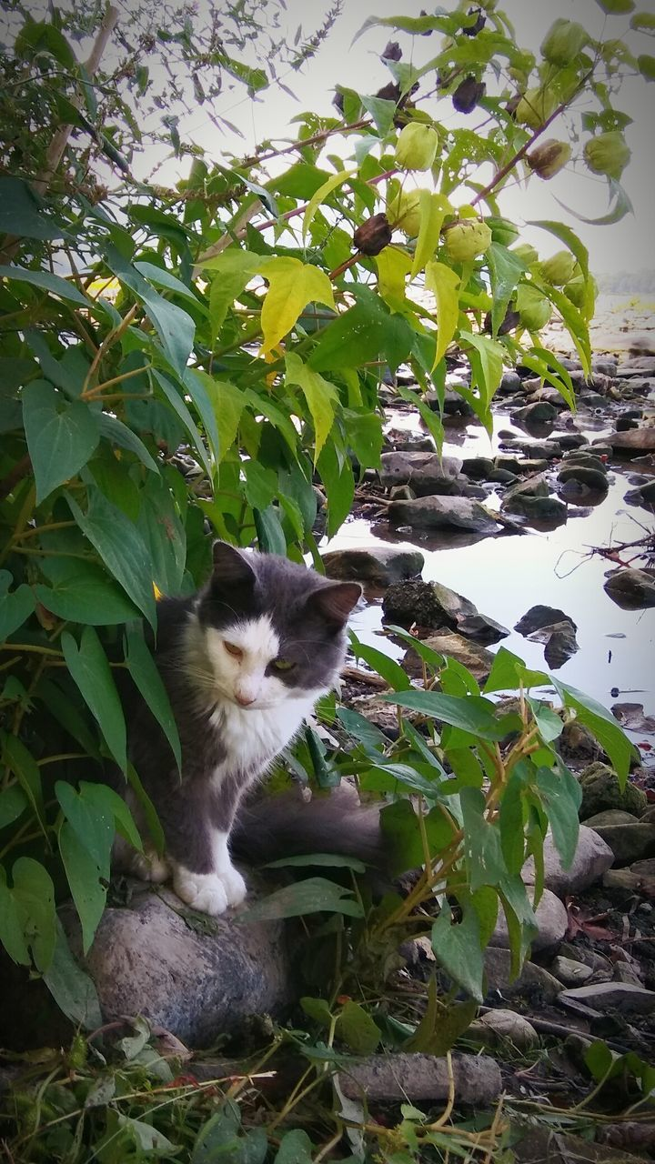 domestic cat, one animal, pets, feline, cat, domestic animals, mammal, leaf, animal themes, sitting, no people, plant, day, growth, nature, outdoors