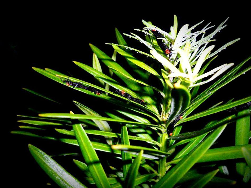 Plant Bug Bugs Love Love Bug Love Bugs Night Dark