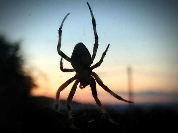 Spider Through The Window S8Photography Creative Photography Taking Photos Eight Legs Spider Web Nature Insect Black Color The Week On EyeEm The Great Outdoors - 2017 EyeEm Awards Ligjt And Shadow Sunset Taking Pictures Clouds And Sky Edited My Way Beauty In Nature Creative Light And Shadow Color Photography Close Up Photography No People Close-up Day Outdoors Sky