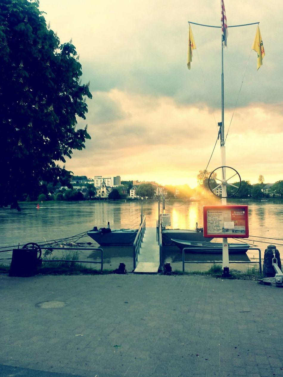 vor paar tagen am Rhein aufgenommen Enjoying The Sun Sunbathing Relaxing Swimming