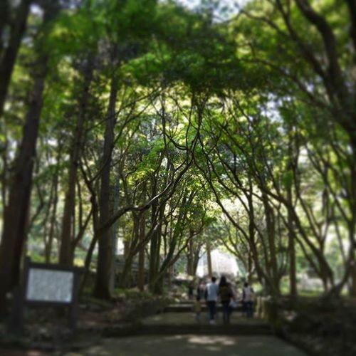 大分 高崎山 山 散歩道 夏 散歩