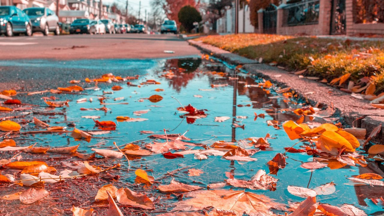leaf, water, autumn, outdoors, day, nature, no people, beauty in nature, tree, close-up