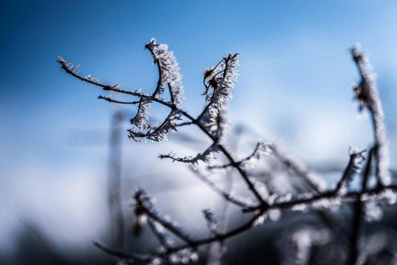 Beauty In Nature Branch Close-up Cold Temperature Day Frost Hoar Frost Low Angle View Nature No People Outdoors Plant Rime Sky White Frost Winter Winter