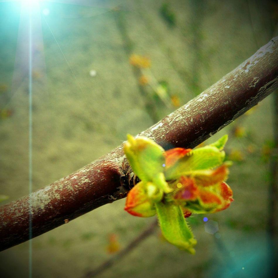 Ağaçlar çiçek açmış yaz mı gelecek ne :-D Photography Like Hello World Kurşunlu Çankırı Çankırı / Turkey