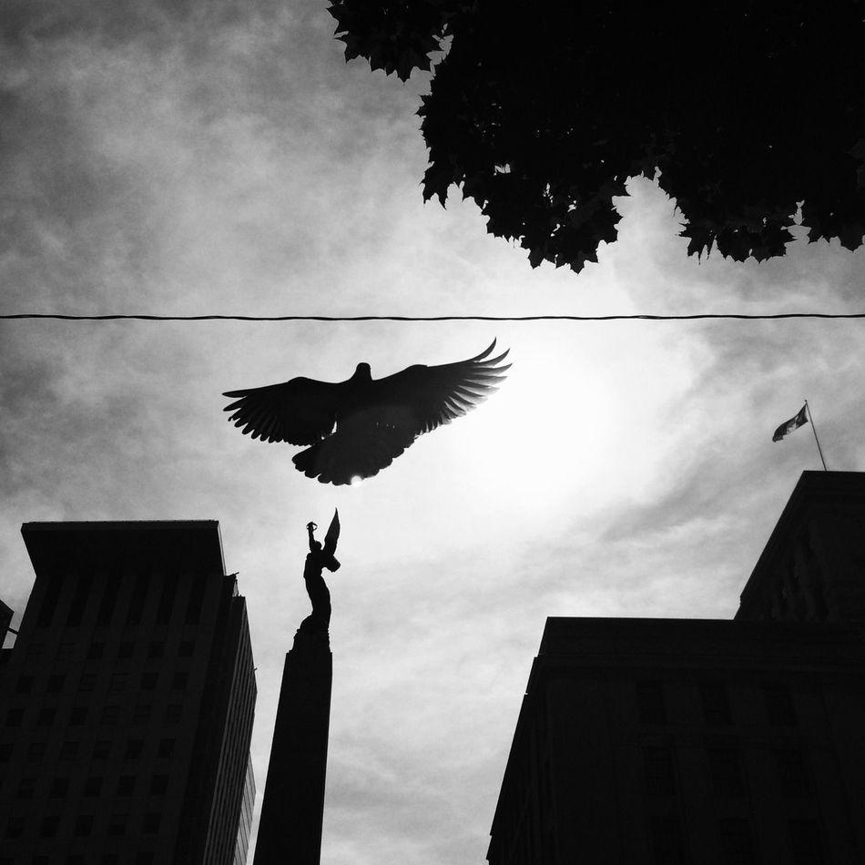 Beautiful stock photos of angel, Angel, Animal, Animal Behavior, Animal Themes